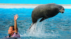 Vancouver Seals Left Blind After Transfer To