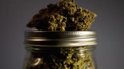 Medical Pot Lawsuits Piling