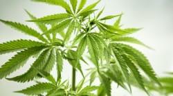 Un distributeur de marijuana à Vancouver