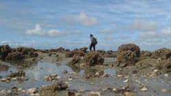 Pas de pêche aux moules moules moules ce week-end dans le bassin