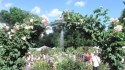 Sai come si organizza un giardino?