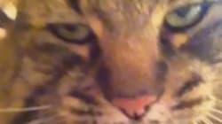 Ce chat n'a vraiment rien de mignon