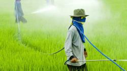 Vivre sans pesticides, des solutions