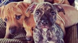 Você não vai resistir ao ver estes cães abandonados a caminho de um
