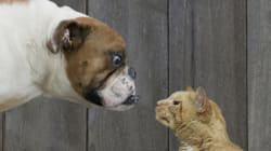 Are You a Cat or a Dog in