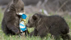 LOOK: Cubs Play With Garbage, Humans Kinda
