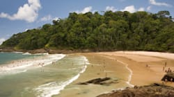 69% da população brasileira depende diretamente da Mata
