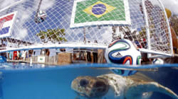 5 Animals That Could Pick The World Cup