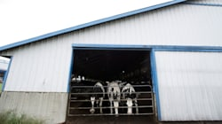 Thousands Call For Boycott Of B.C. Dairy Farm After Abuse