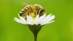 Faut-il acheter une ruche pour sauver les