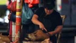 Chine: le festival de viande de chien vivement