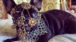 La Peta s'inquiète pour le chien de Lady