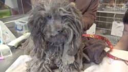 El rescate y la transformación de Theo, el perro que llevaba un año abandonado