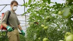 Les pesticides menacent en fait bien plus que les