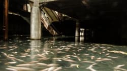 廃墟になったショッピングモールで、コイが悠々と泳いでいる【画像】