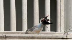 I gabbiani a Piazza San Marco fanno i bulli con i