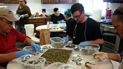 Cannabis: ouverture des premiers magasins dans l'État de