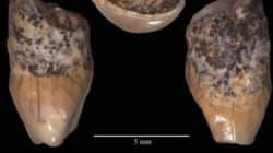 Apparteneva a un bambino di 6 anni vissuto 600 mila anni fa