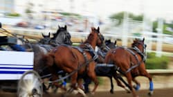 Chuckwagon Horse Collapses, Dies At Stampede