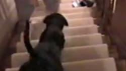 ¿Quién dijo que bajar las escaleras era fácil?