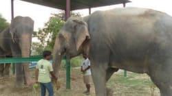 L'elefante che piange ora ride (FOTO,