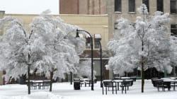 The 2014 Ice Storm Killed Something I