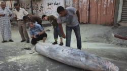 Jour 5 à Gaza: 45 Palestiniens tués samedi dans des frappes