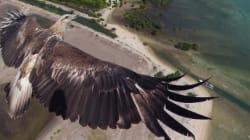 飛んでるワシをこんなに近くから!ドローンから撮った写真のコンテストがすごい(画像)