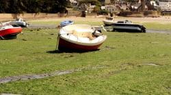 L'Etat jugé responsable de la mort d'un cheval à cause des algues