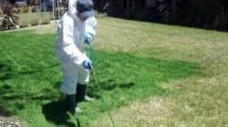 Sécheresse : les Californiens peignent leur pelouse en