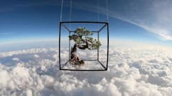 Anche i bonsai e i fiori volano nello spazio