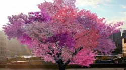 ► 1 Tree, Forty Kinds Of