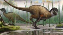 Les dinosaures avaient peut-être tous des