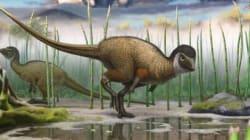 La scoperta che cambierà per sempre 'Jurassic Park'