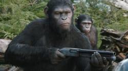 Les singes pourraient-ils un jour dominer la