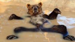 Cet ours a bien fait rire les