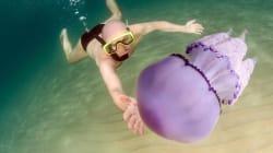 In Sardegna meduse grandi fino a mezzo