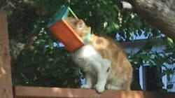 Fugitive Cat With Bug Catcher Stuck To Its Head Has Been Safely
