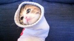 Ce chat dans une chaussette a fait le bonheur des