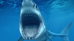 WATCH: Believe It Or Not, There Are Sharks In
