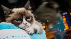 Grumpy Cat Visited Toronto Once. She Hated