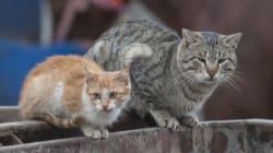 ガザの人々・猫・暮らし(画像)