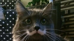 Le chat moustachu avant