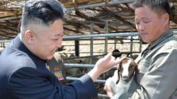 Solo capre di alta qualità per l'esercito della Corea del