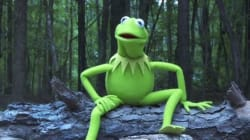Même Kermit la Grenouille s'est mis au Ice bucket