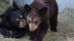Calgary Zoo Welcomes Orphaned Bear