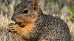 Filature pour avoir nourri des écureuils: il voulait protéger nos