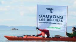 Cacouna: Demande d'injonction pour empêcher les travaux du port