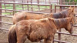 53 Animals Seized From Northern Interior B.C.