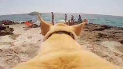 Rien n'empêchera ce chien de se jeter à l'eau. RIEN